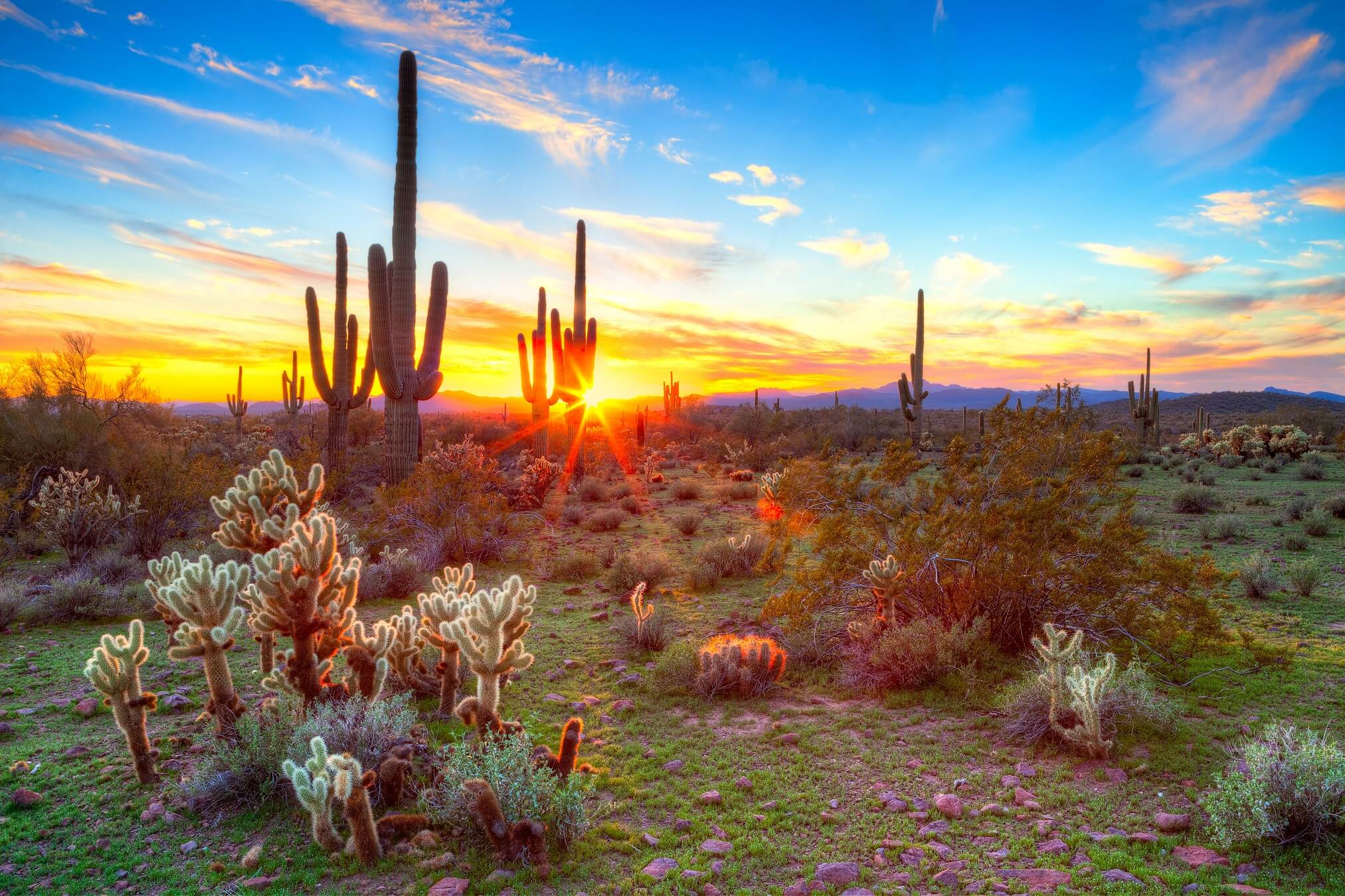 Pictures of Arizona don't get more beautiful than this colorful desert shot.