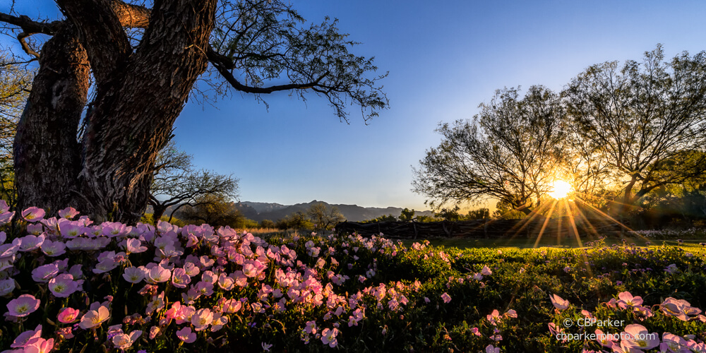 Beautiful flowers, trees, and plants in growing in the Tucson sunlight.