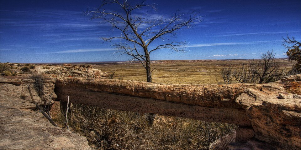 An old fossilized log bridge in the Petrified Forest.