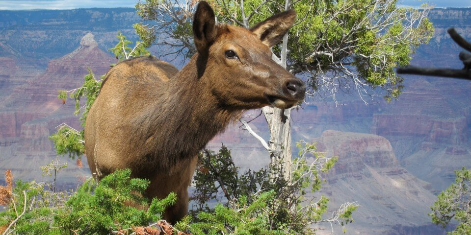 Mammals abound in the Grand Canyon like this one. There are many astounding facts about the Grand Canyon.