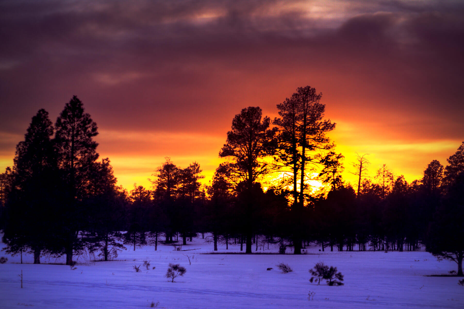 A picture of Arizona's sunset near Marshall Lake, Flagstaff.