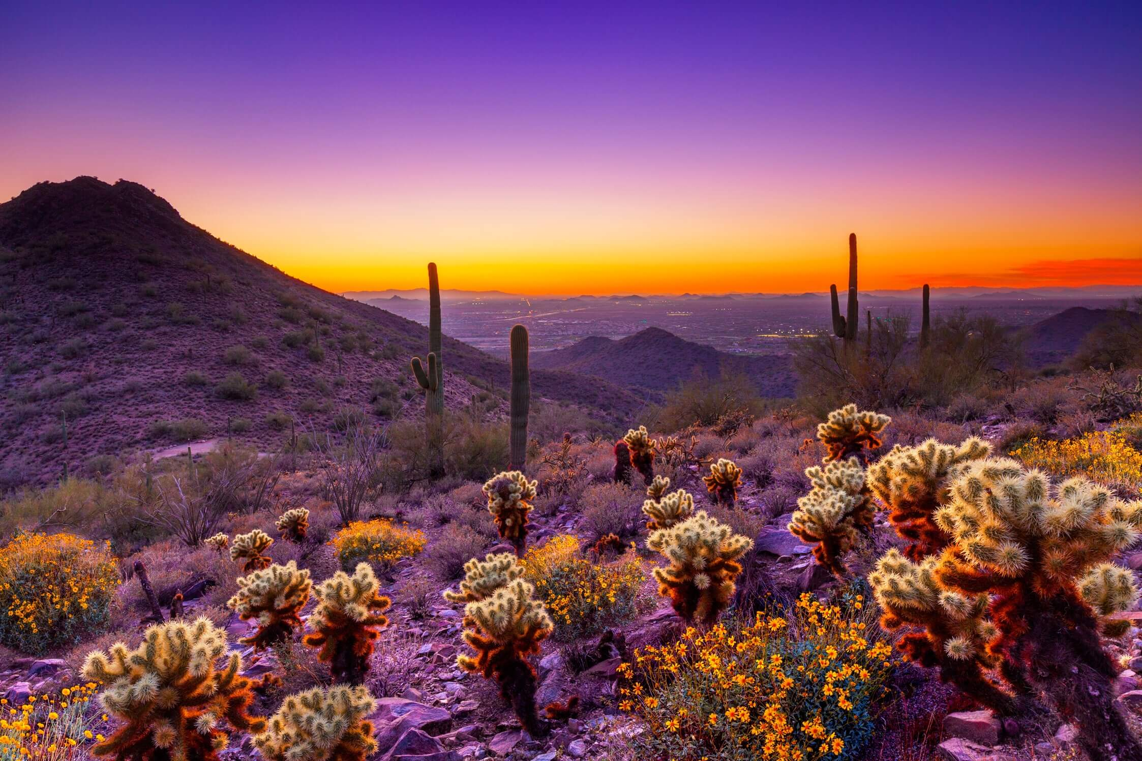 Colorful pictures of Arizona desert sky and cacti overlooking the valley.