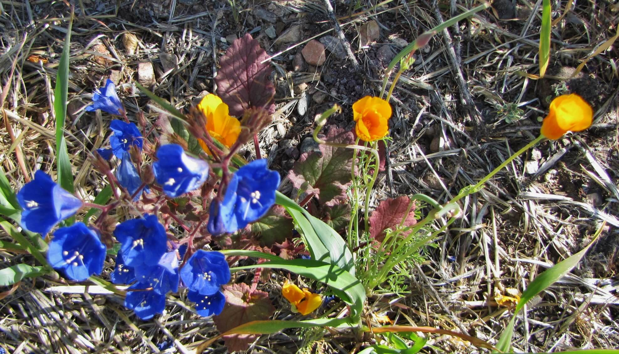 A variety of flowers grow in Arizona. These plants are diverse and interesting.