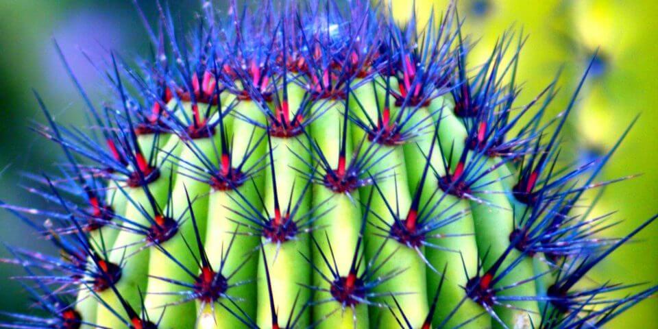 Flickr User I Luv Cameras