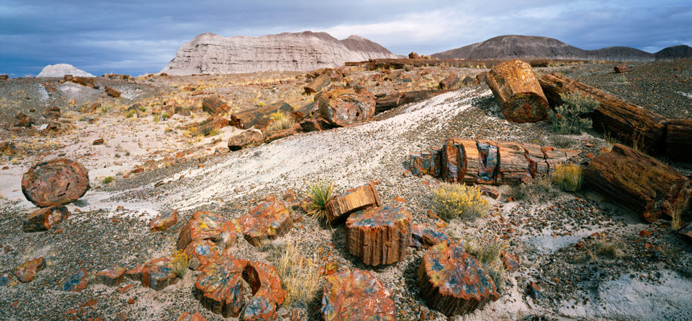 10 Things You Didn't Know About Petrified Forest National Park