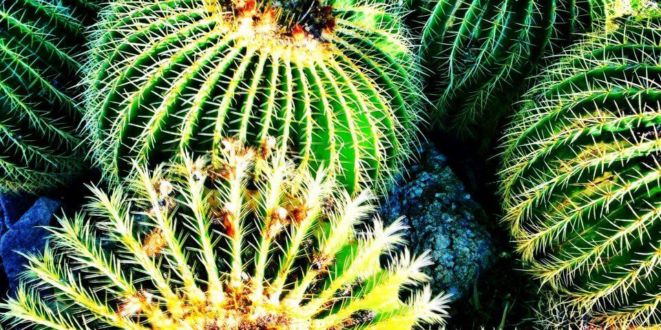 6 Flickr User Jaime Glasser