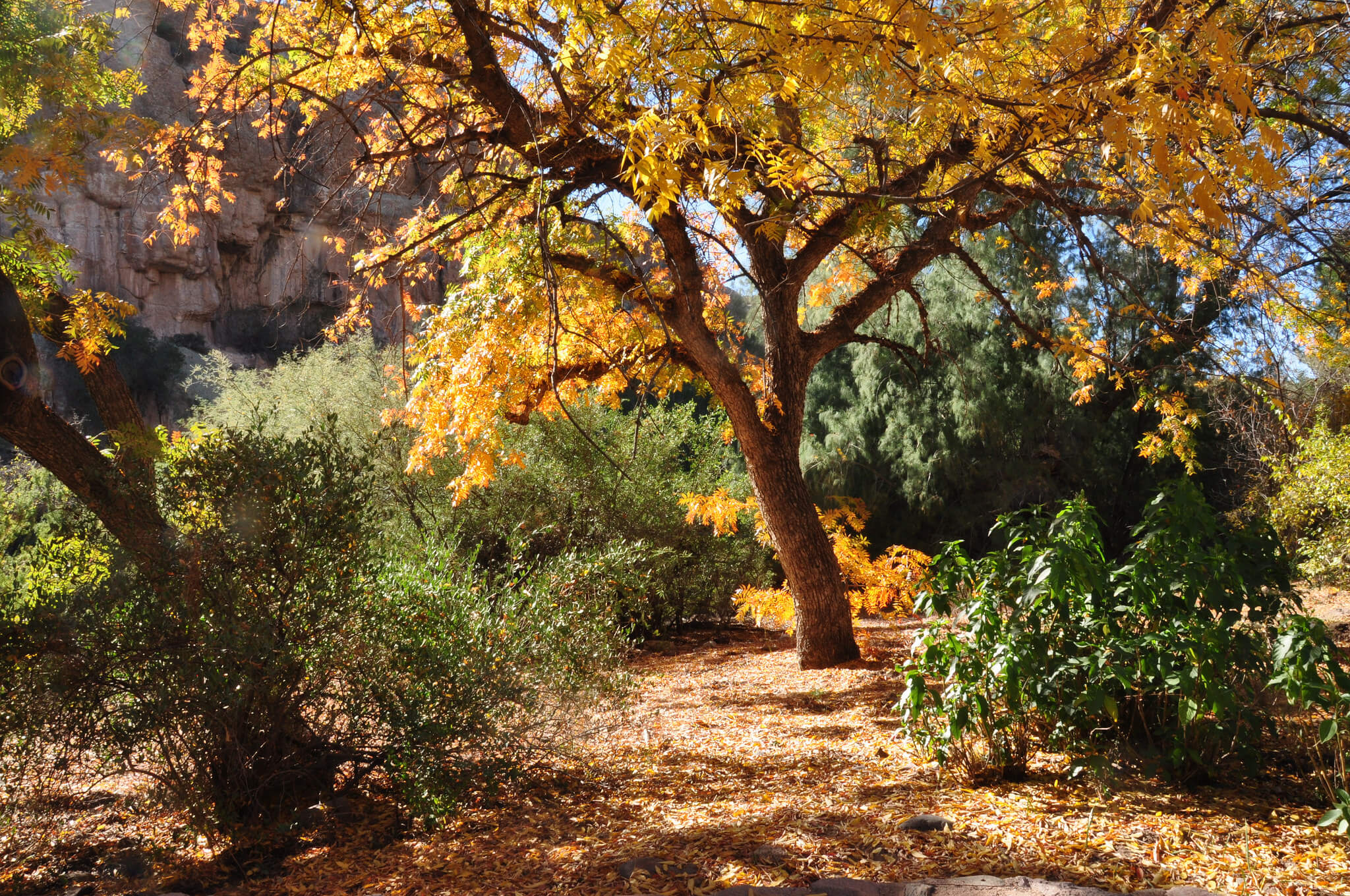 8 Facts About Boyce Thompson Arboretum State Park