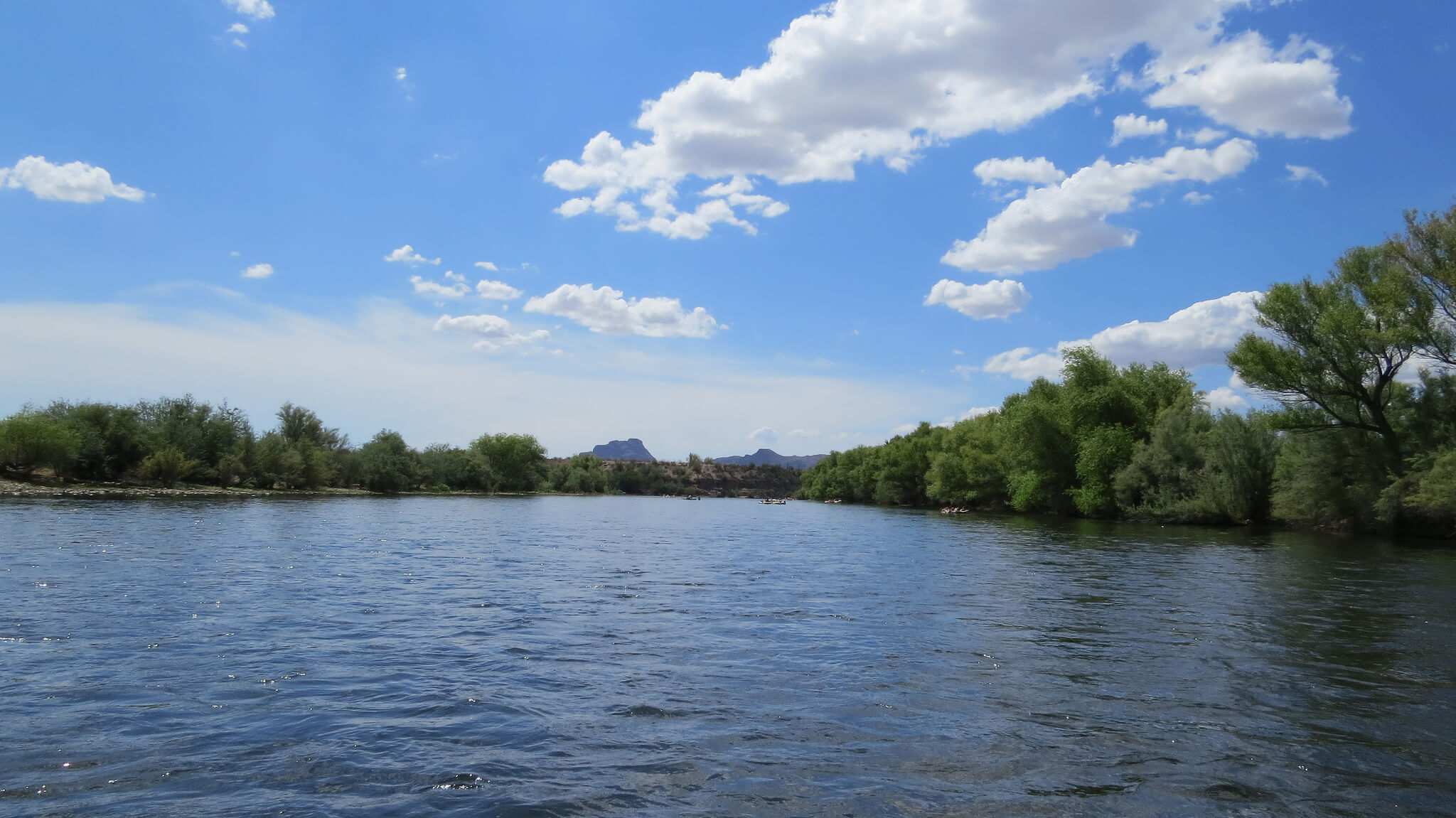 8 Beautiful Pictures of Salt River, Arizona