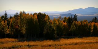 5 Reasons You Absolutely Must See Coconino National Forest