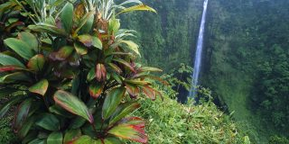 You Only Need 2 Reasons to Visit Akaka Falls State Park