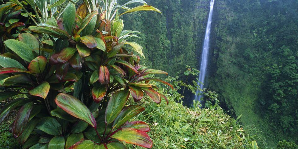 Here Are The Only 2 Reasons Why You Need To Visit Akaka Falls State Park
