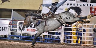 5 Reasons You Should See the World's Oldest Rodeo!