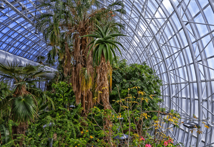 Crystal Bridge Tropical Observatory