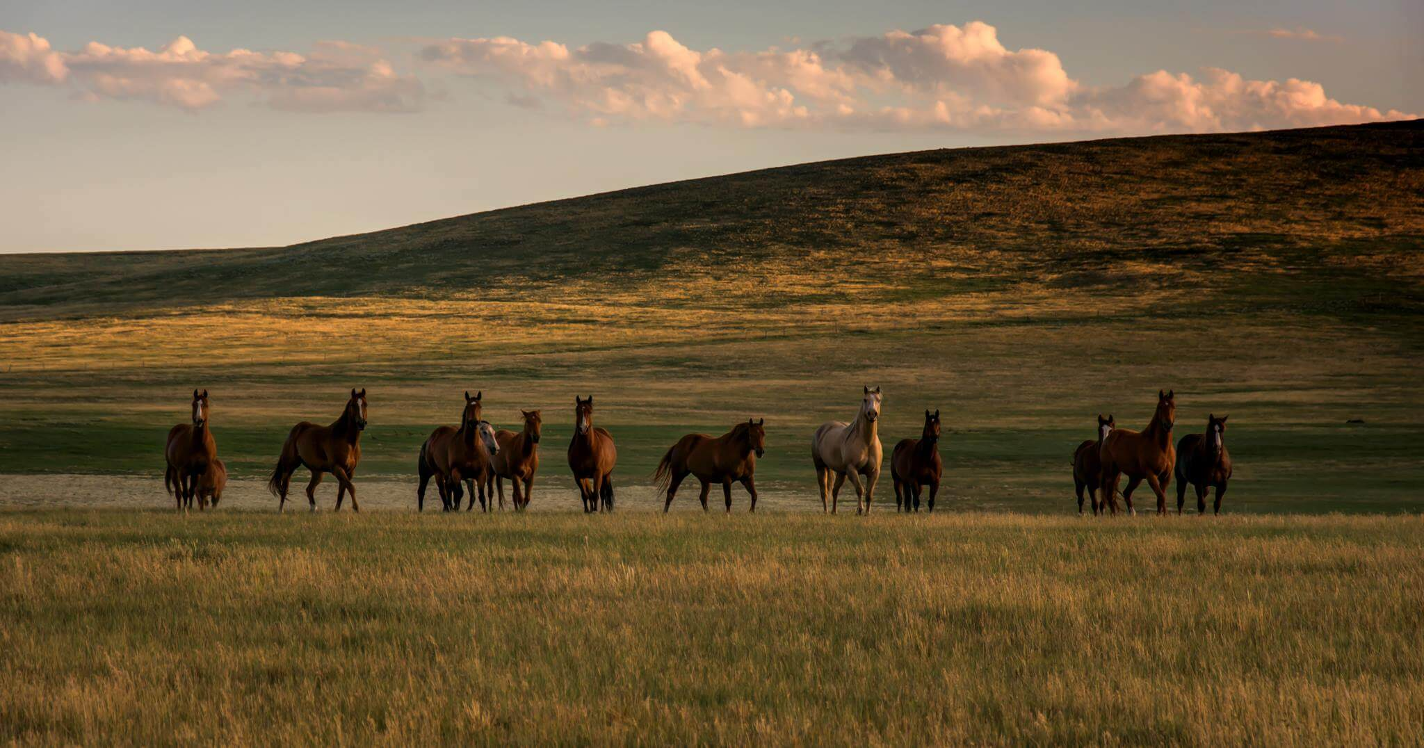 Horses in North Eastern, New Mexico - Photo by Tom H