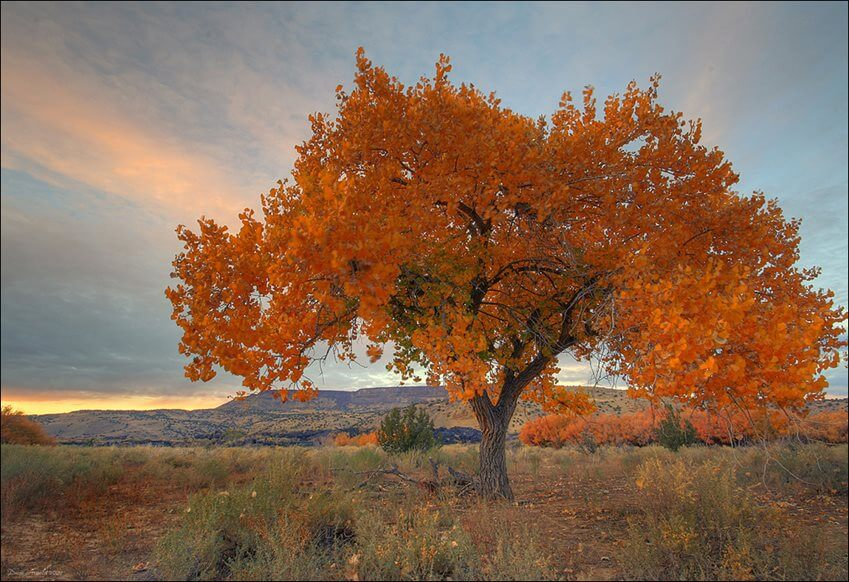 New Mexico Golden Autumn - Photo by Dave Arnold