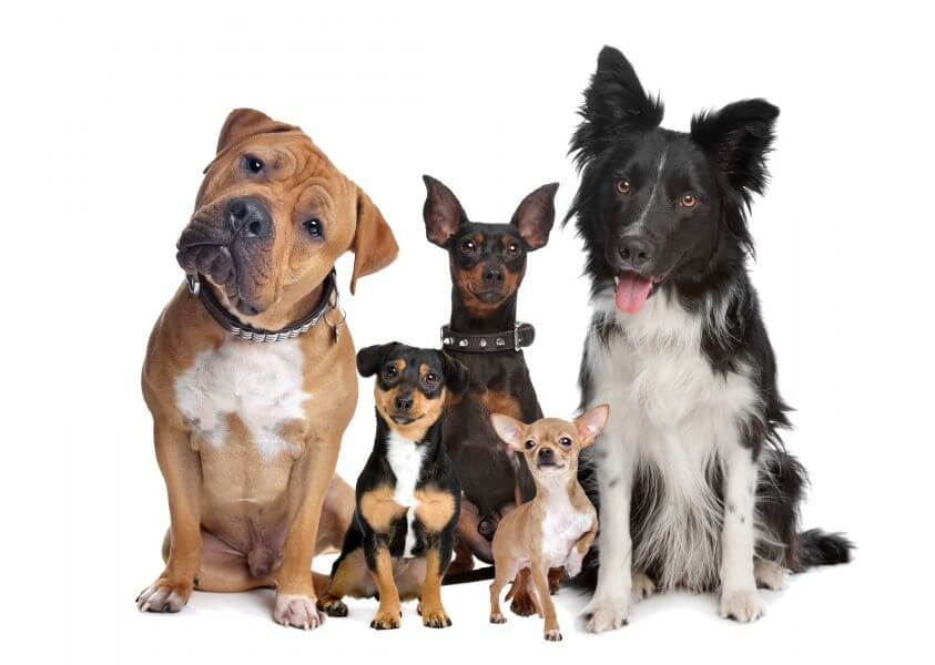 http://www.pets4homes.co.uk/pet-advice/best-dog-breeds-for-families.html