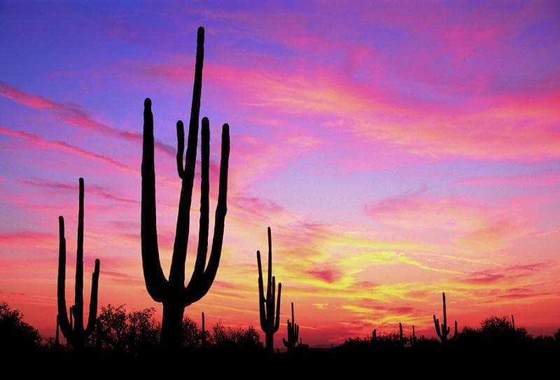 cactus_sunset_whop blogspot.com