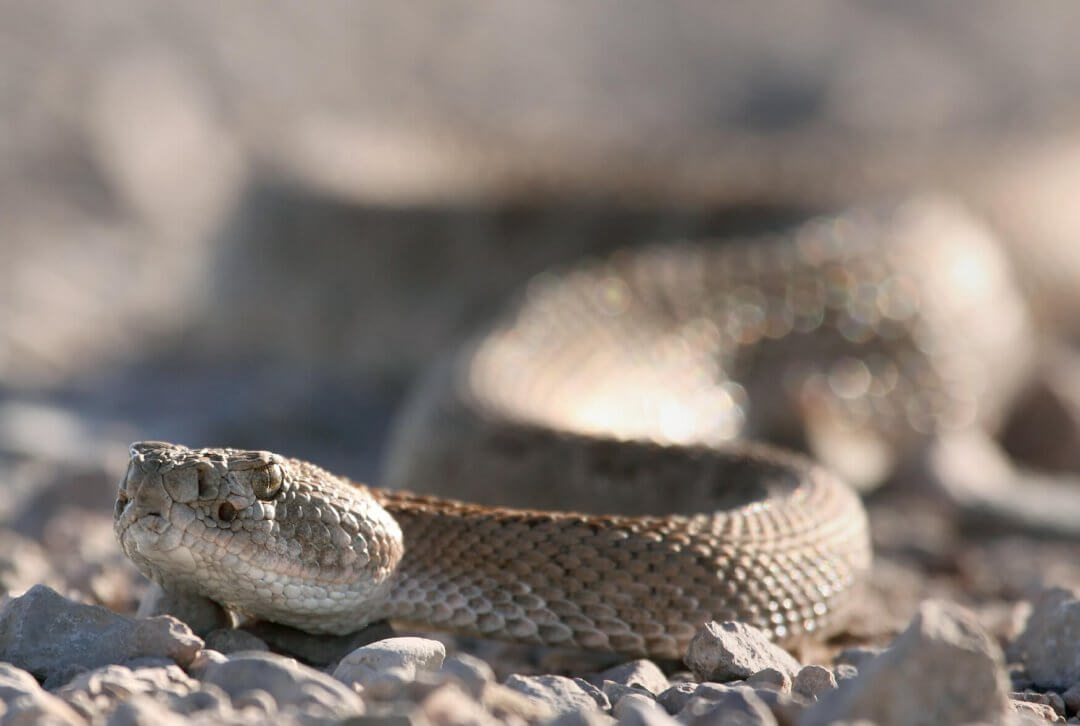 These Are 5 Of The Most Dangerous Creatures Found In New Mexico