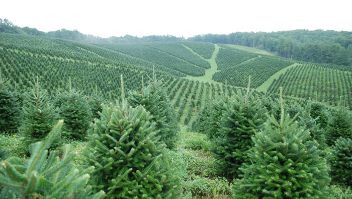 http://www.christmastreewreaths.com