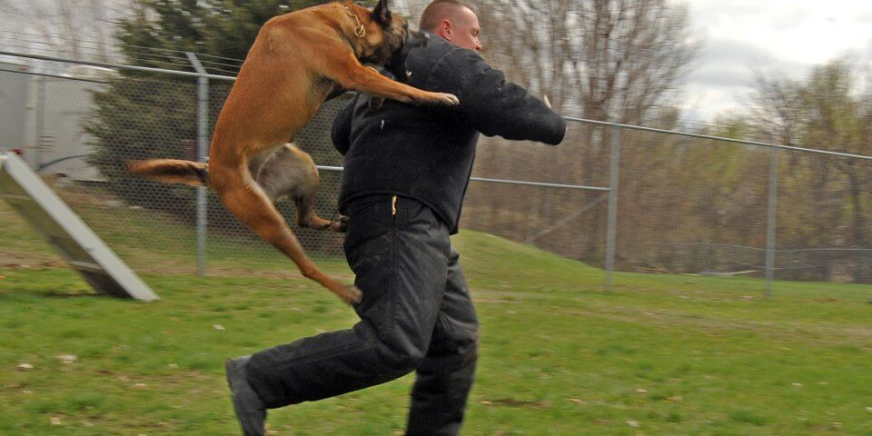 Bellevue Officer Jim Bartley, gets pounced on by Leda, a Lavista Police Dog, during a routine joint training with Offutt handlers and military working dogs on 10 Apirl 2007. (U.S. Air Force Photo by Josh Plueger)