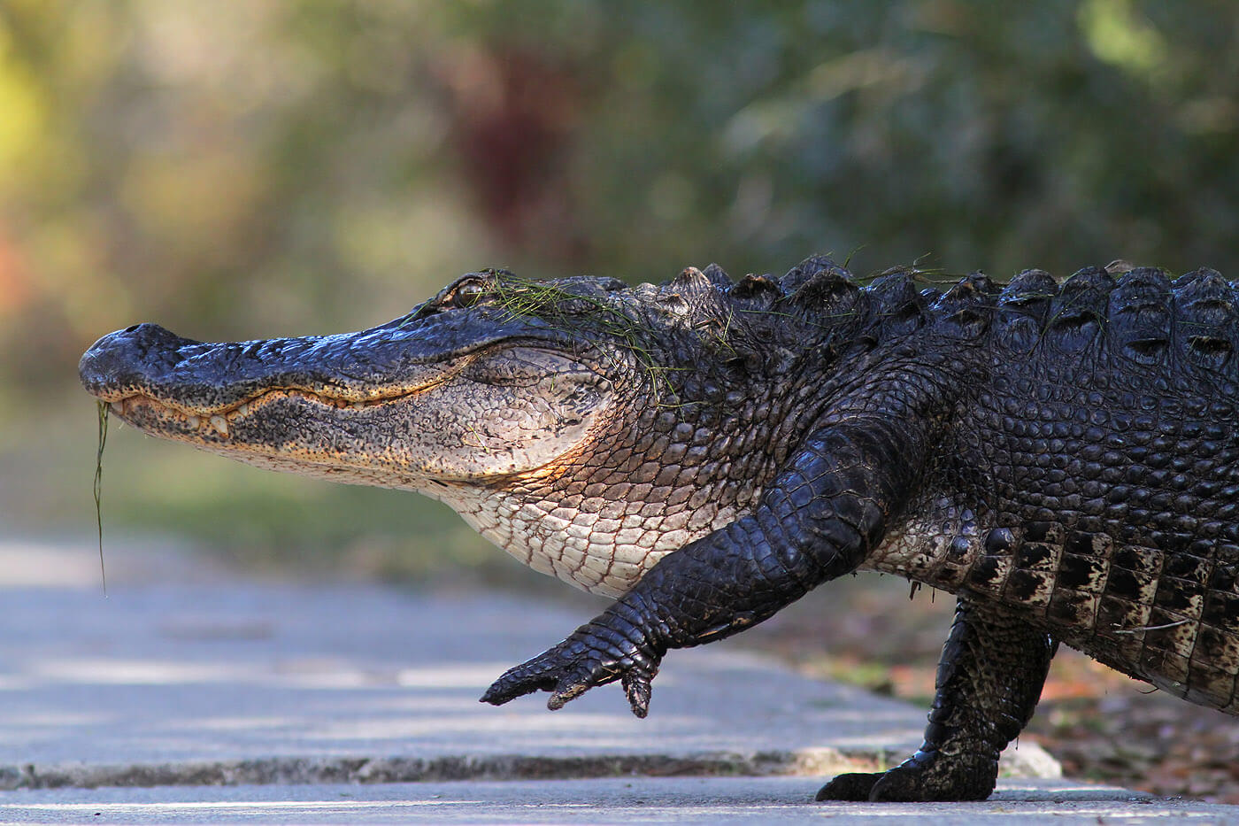 Here Are 9 Of The Most Dangerous Animals Found In North Carolina