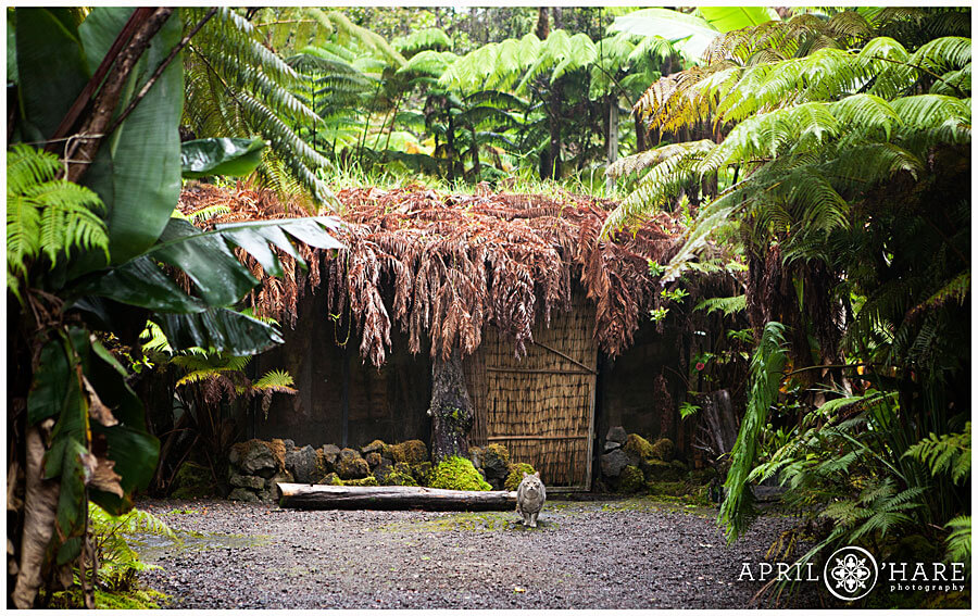 There's No House In The World Like This One In Hawaii