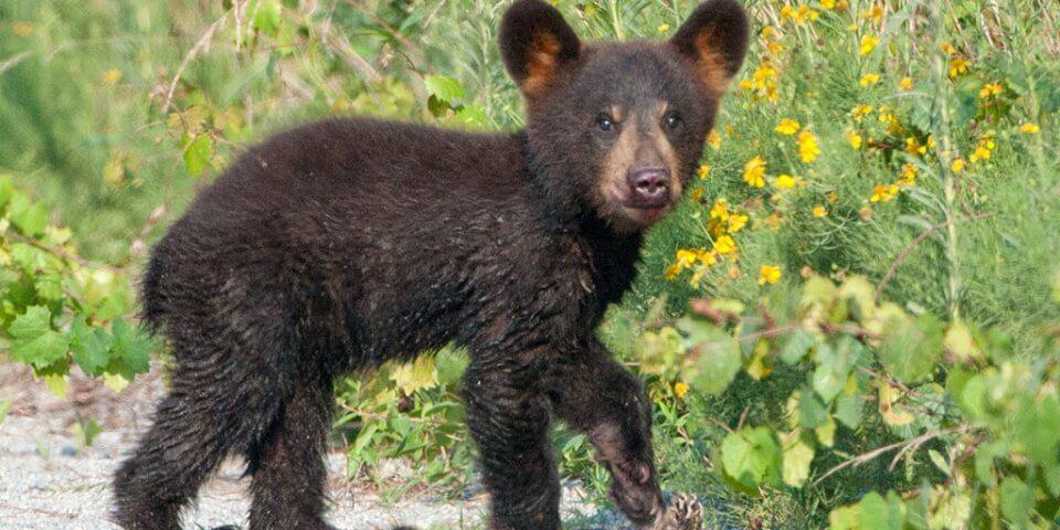 http://travel4wildlife.com/things-to-do-asheville-wildlife-adventures-