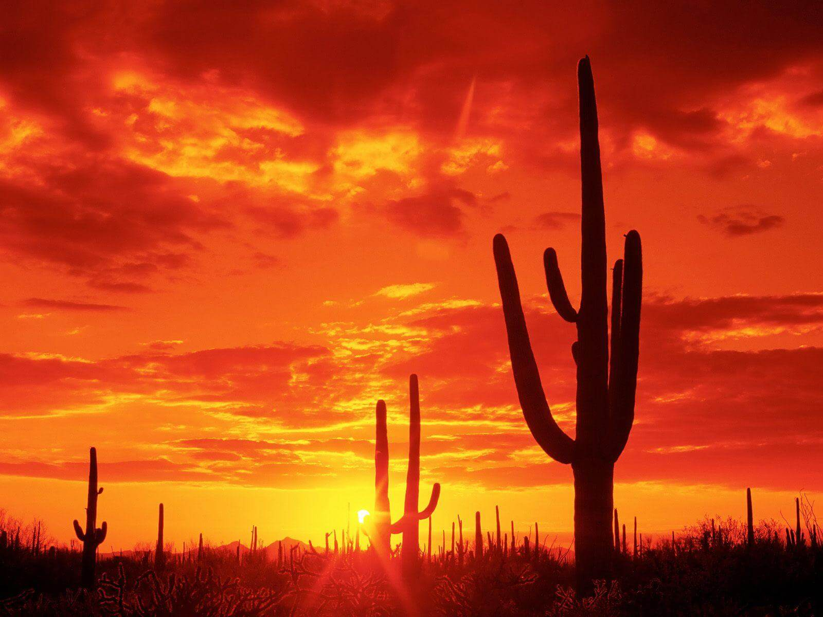 Here Are 10 Jaw Dropping Photos From Arizona To Get You Through Your Week.