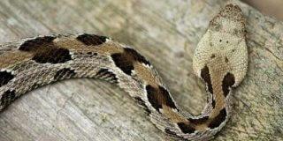 5 Of The Most Dangerous Illinois Animals
