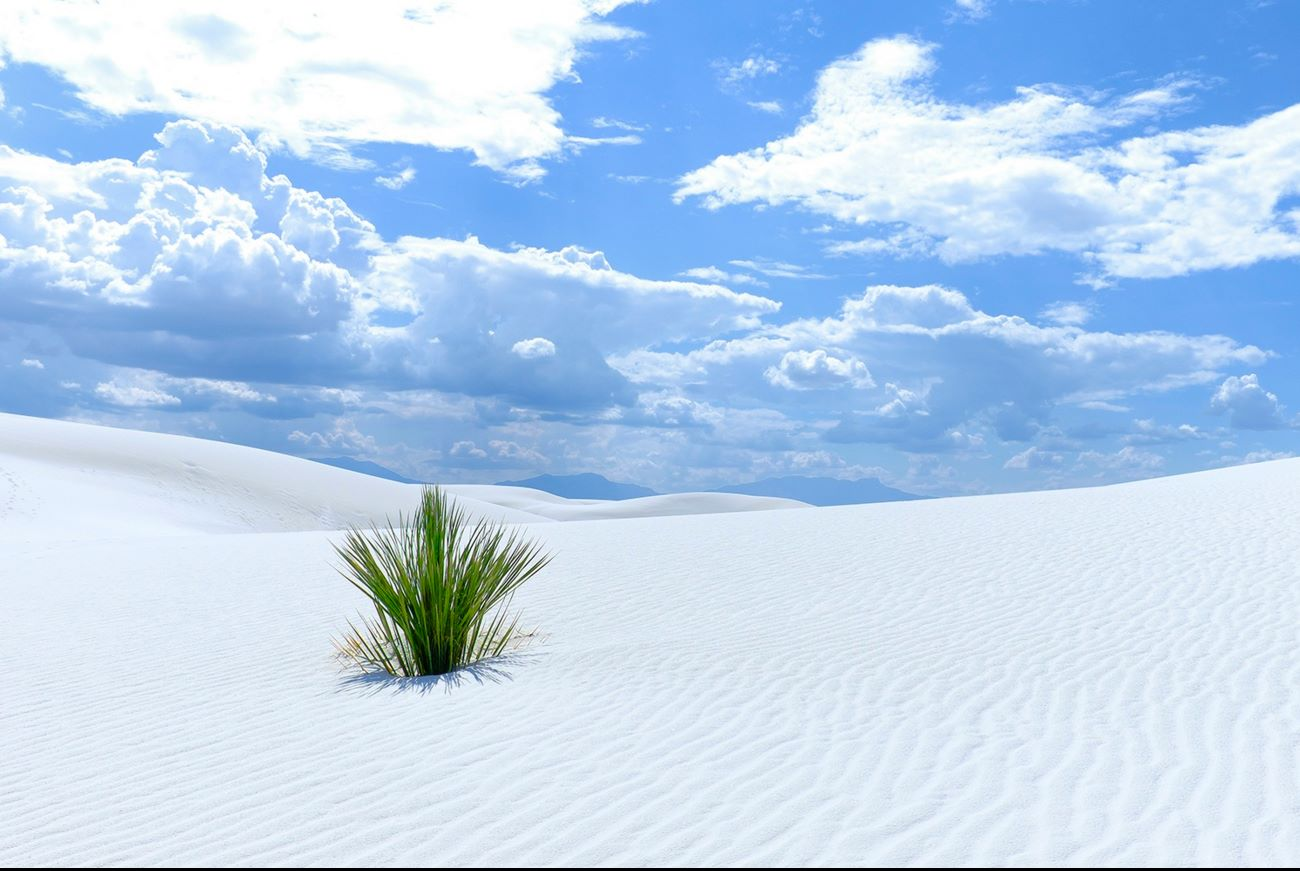 7 Reasons To Drop Everything And Visit White Sands National Monument