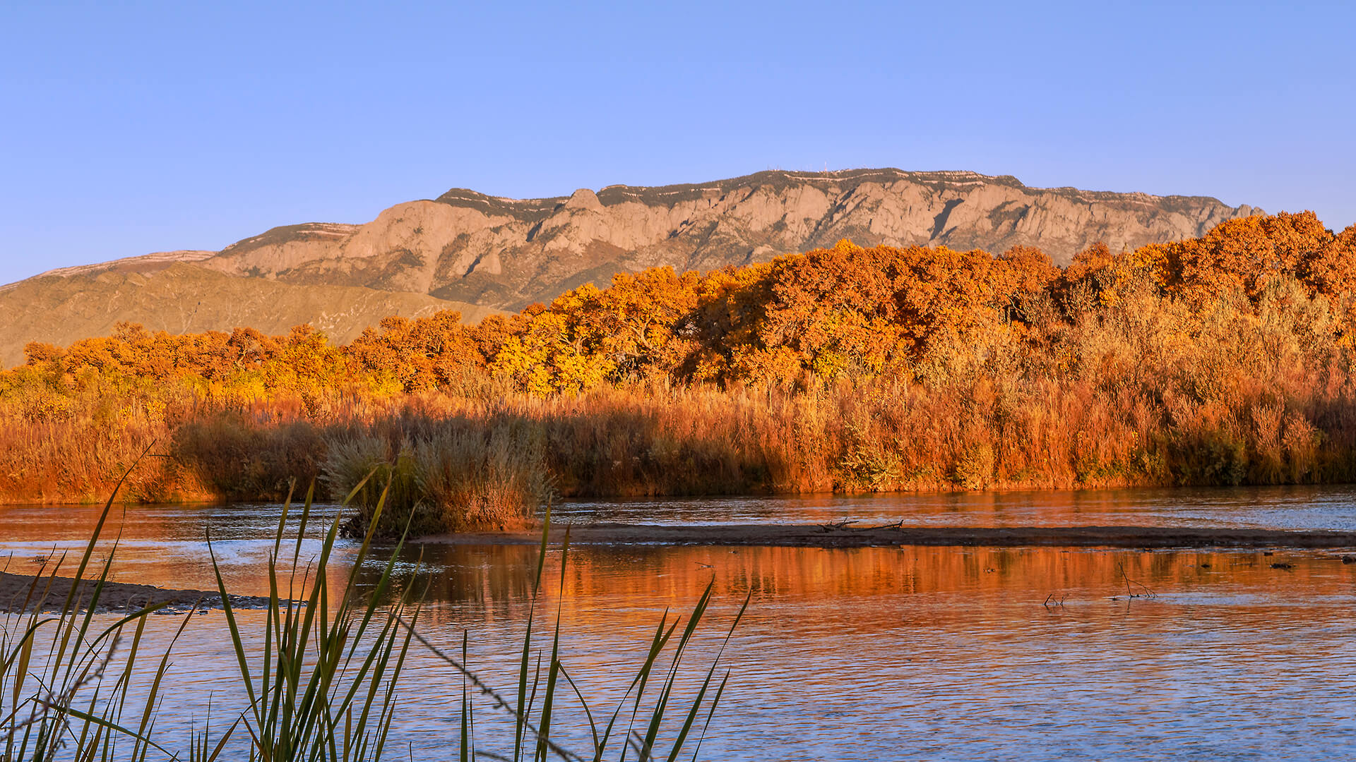 Autumn on the Rio Grande. Fall foliage in the Bosque along the Rio Grande River in Albuquerque, NM.