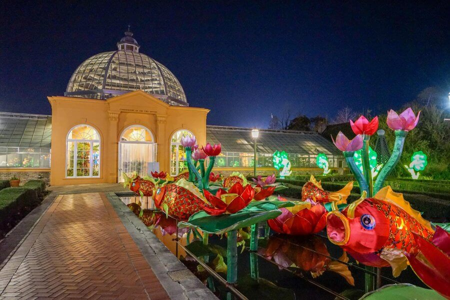 China lights light up the night at the New Orleans City Park. Red Koi fish and pink tulips abound. Photo by Paul Broussard