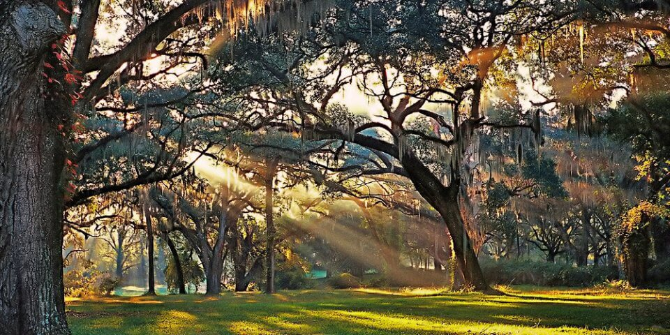 Greenwood Plantation in St. Francisville, Louisiana - Photo by Cary Jones Crawford