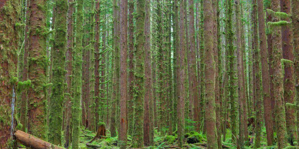 Hoh Rainforest - Photo by Dan Sorensen