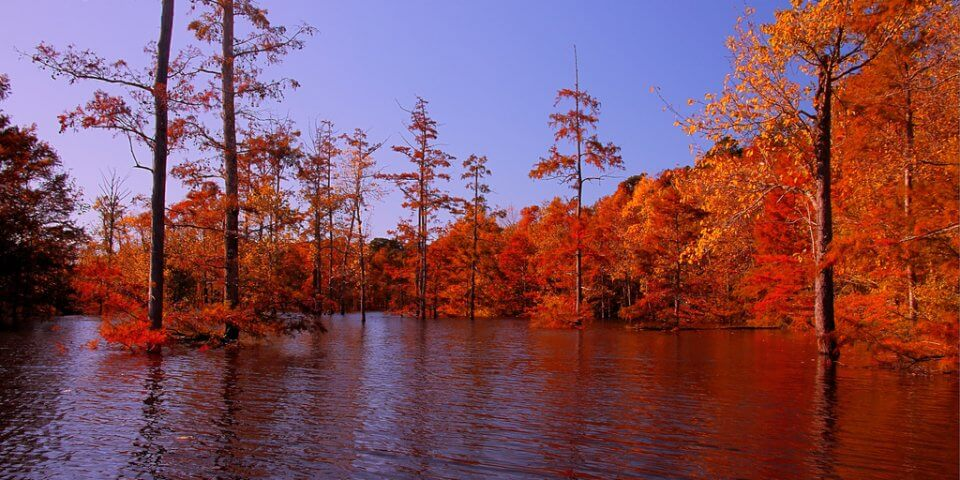 Finch Lake in Louisiana's Upper Ouachita National Wildlife Refuge - Photo by U.S. Fish and Wildlife Service