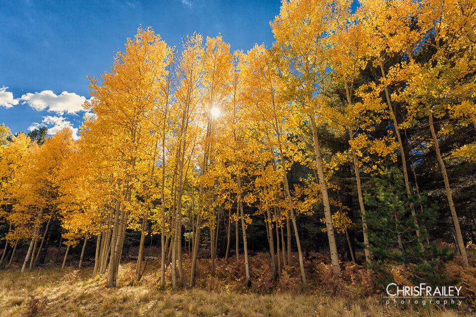 Here Are 10 Photos of Arizona During Fall That Will Take Your Breath Away