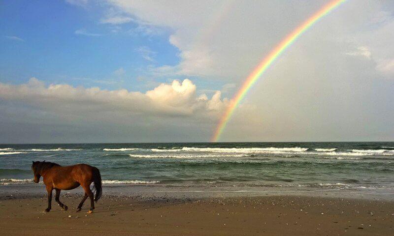 eillu.com/wp-content/uploads/2015/10/outer-banks-horse-rainbow-corolla.jpg
