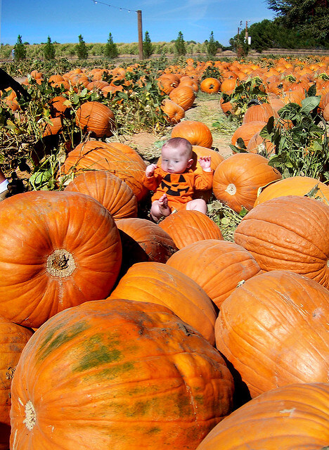 Shnepf Farms Pumpkin Patch in Queen Creek, Arizona - Photo by ladyhawke365