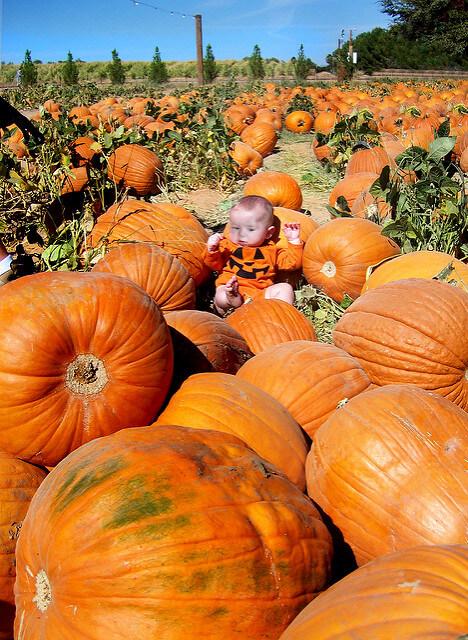 Shnepf Farms Pumpkin Patch in Queen Creek, Arizona - Photo by ladyhawke365