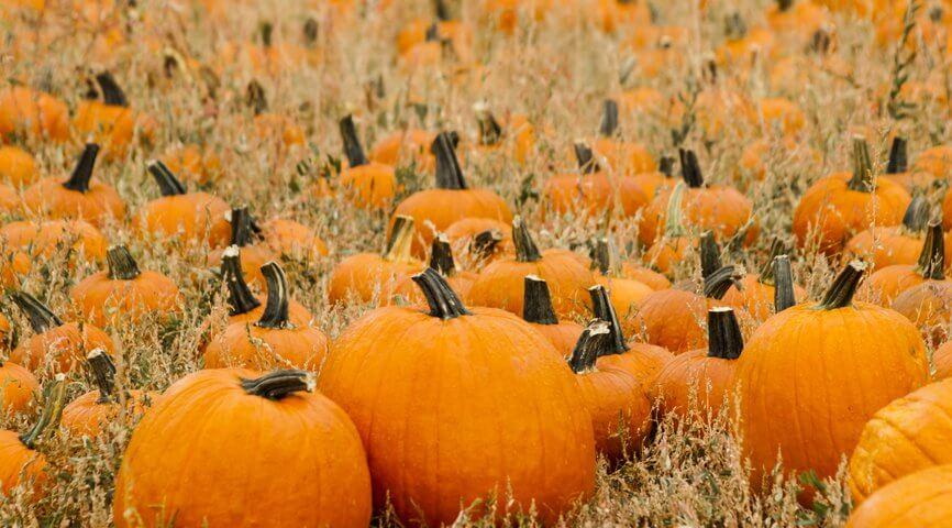 Apple Annie's Fall Pumpkin Celebration in Wilcox, Arizona