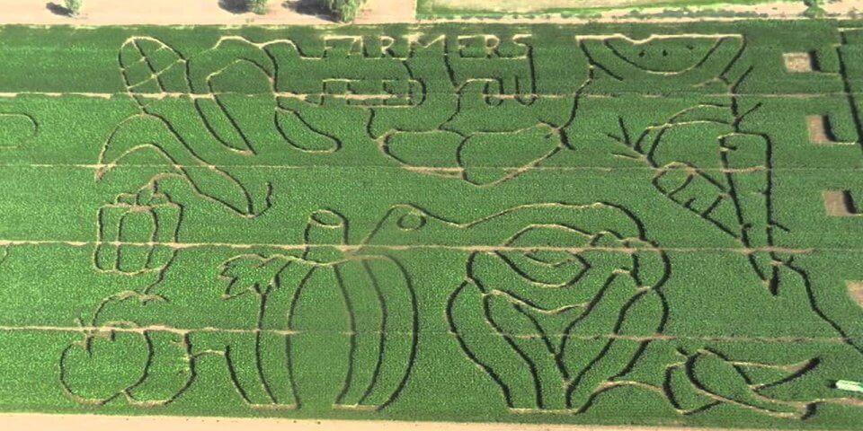 Tolmachoff Farms Corn Maze and Pumpkin Patch