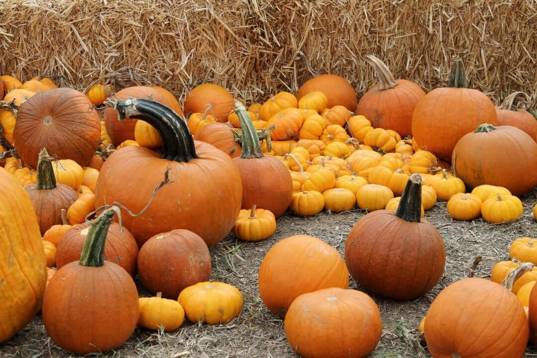 The Absolute Best Pumpkin Patch In New Mexico to Find Your Perfect Pumpkin Match