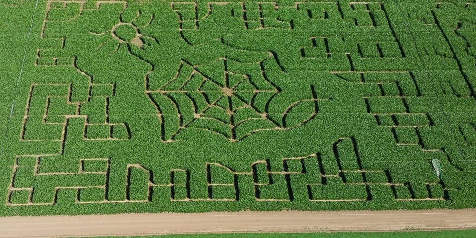 The 10 Best Halloween Corn Mazes In Arizona