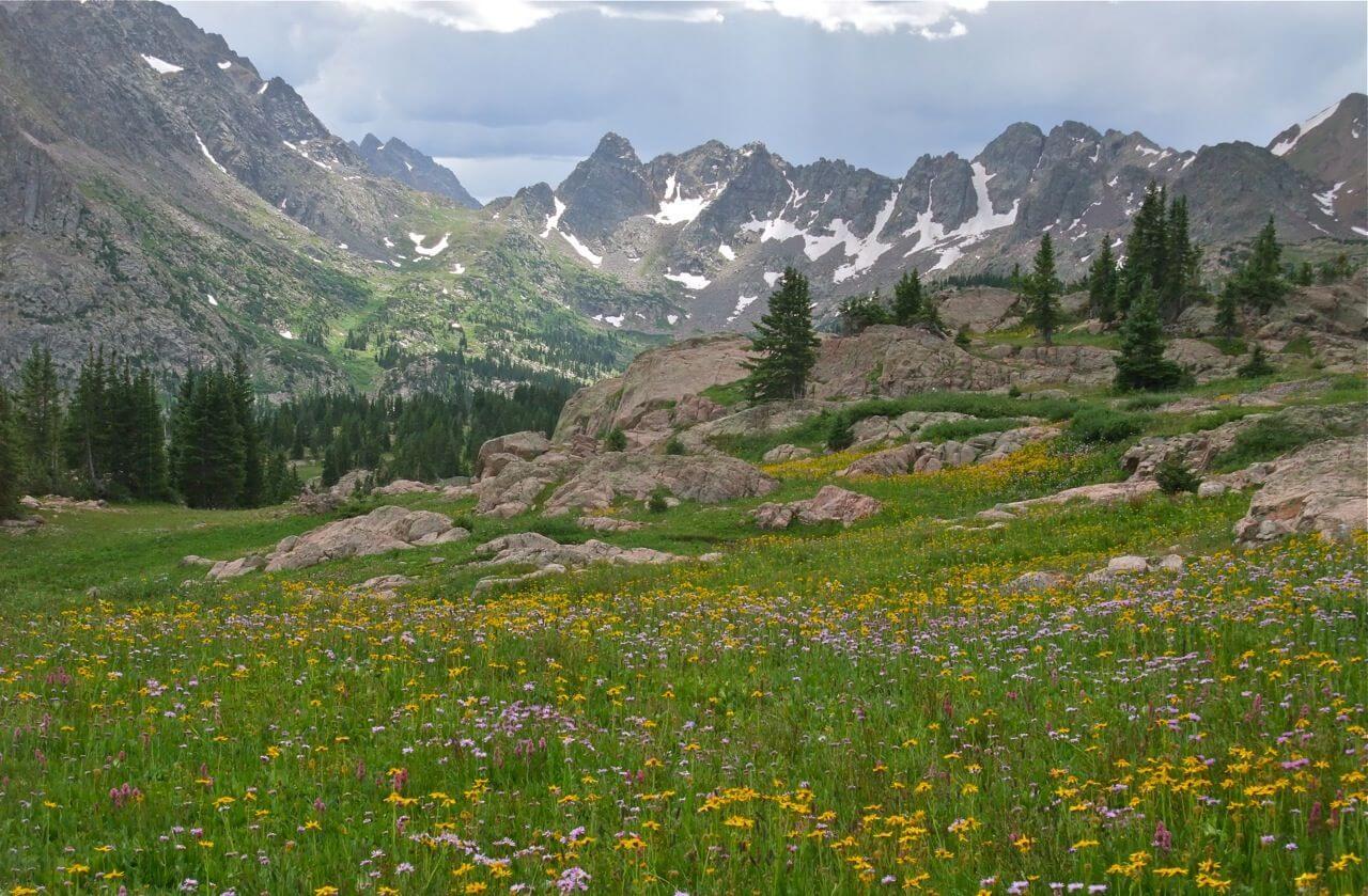 Wildflowers in Summit County Colorado