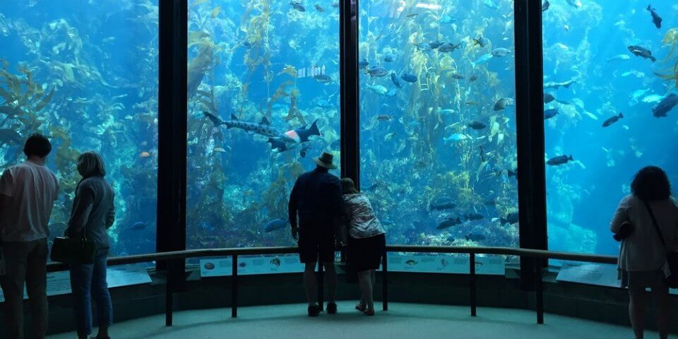 One of the best things to do in California is visit the Monterey Bay Aquarium like these families.