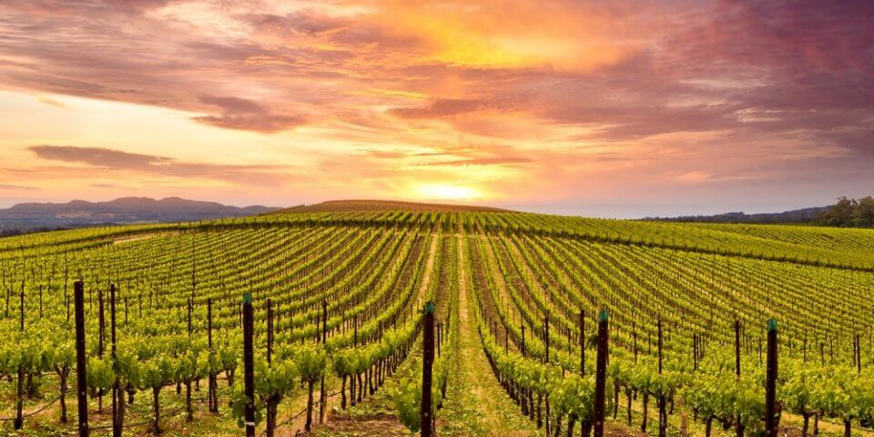 Napa Valley Wineries among the rolling hills of Northern California.