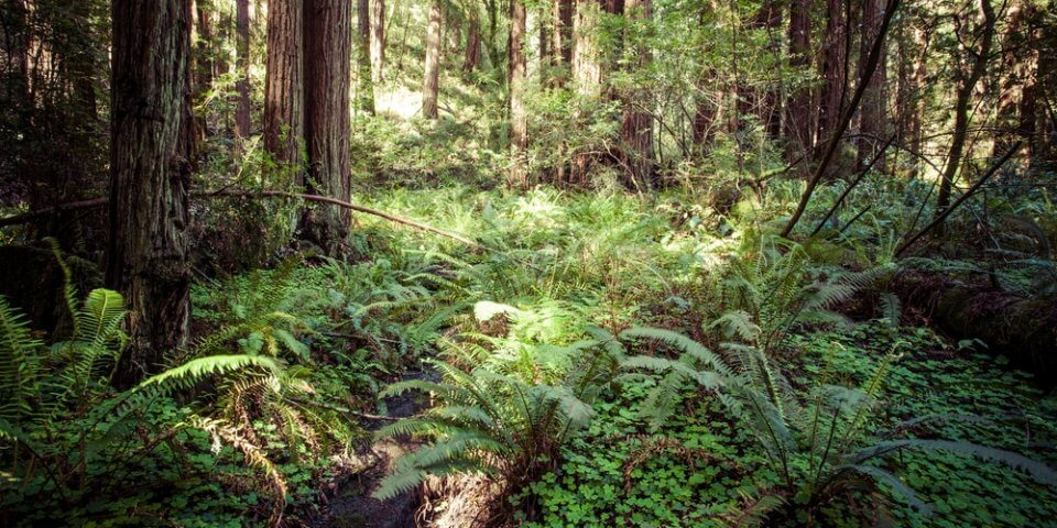 Redwood National Park in California during midday enjoying the sunlight.