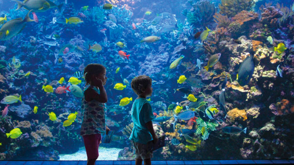 Toddlers gaze in awe at the diverse fish life behind the glass at the maui ocean center