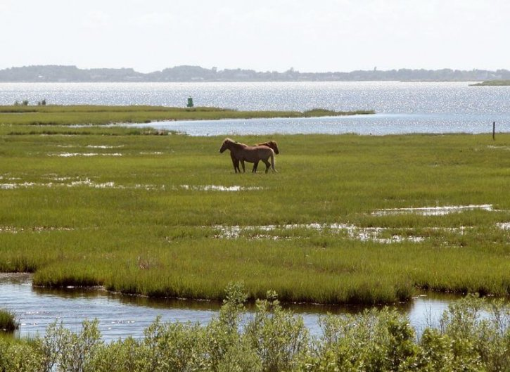 Assateague Island State Park