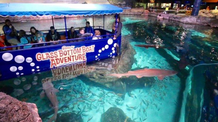 Glass Bottom Boat Adventure Ripley's Aquarium